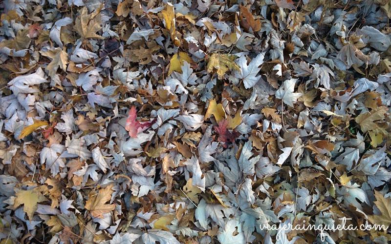 otoño en alemania-3