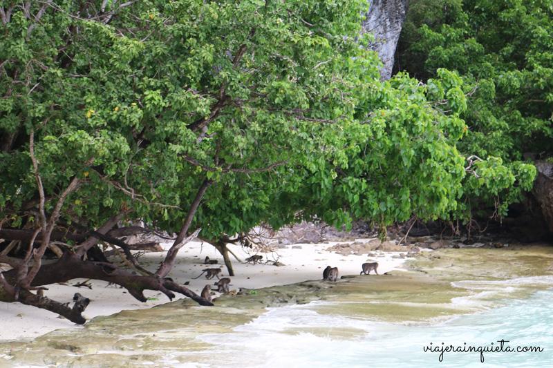 Isla-de-los-monos-Krabi
