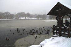 nueva-york.nevado-(7)