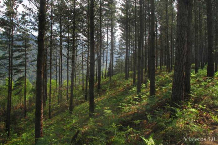 Que ver en Urdaibai, Bosque de Oma