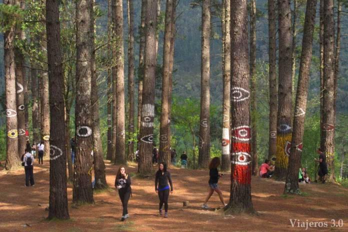 Forêt peinte de grand-mère à Urdaibai