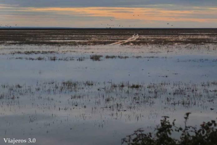 avistamiento de aves en las marismas de Doñana