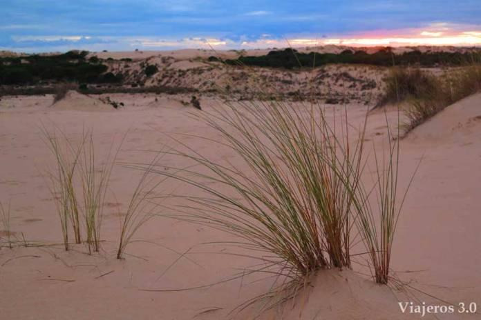 atardecer en las dunas de Doñana