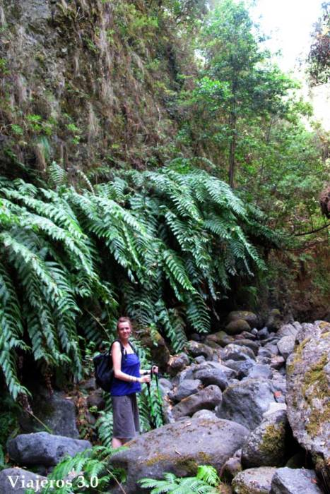 Bosque de los Tilos en La Palma