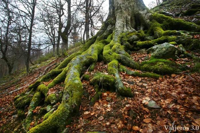 detalle de ruta de senderismo de Tres Aguas al Pozo Negro en Burgos