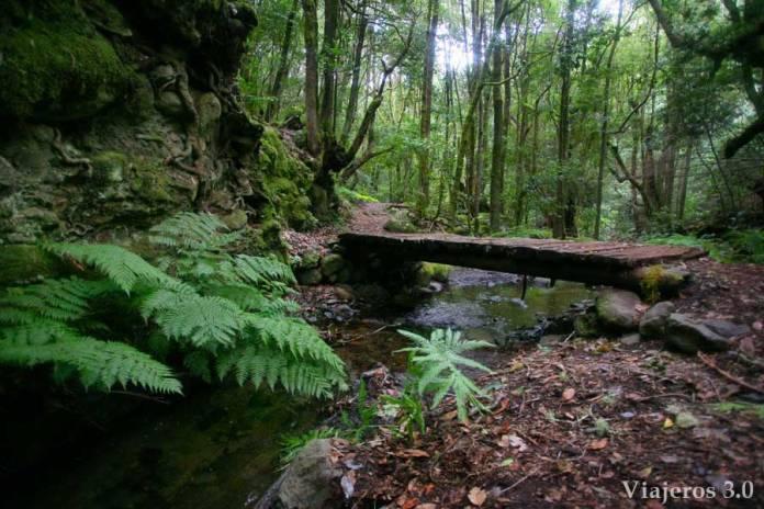 bosque del Cedro, ruta por Garajonay