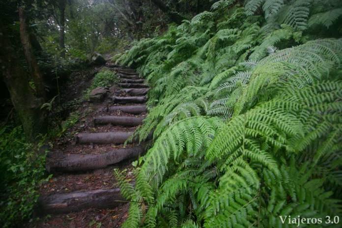 ruta por el bosque del Cedro, en ruta por Garajonay