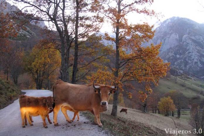 carreteras de Picos de Europa