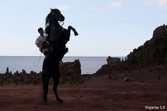 que ver en Menorca, caballo menorquín