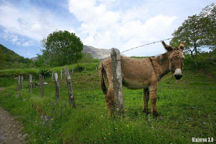 la mejor ruta de senderismo por el Valle de Sajambre