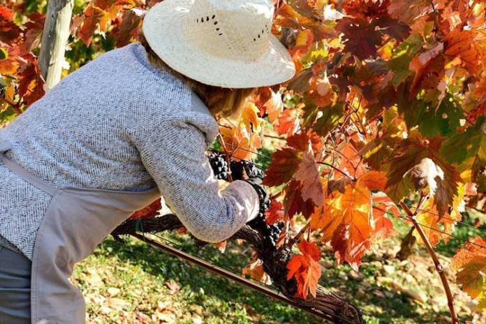 Vivanco, actividades de enoturismo en La Rioja