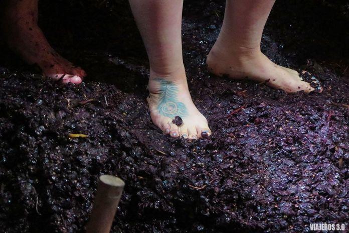 piasado de la uva, actividades de enoturismo en La Rioja