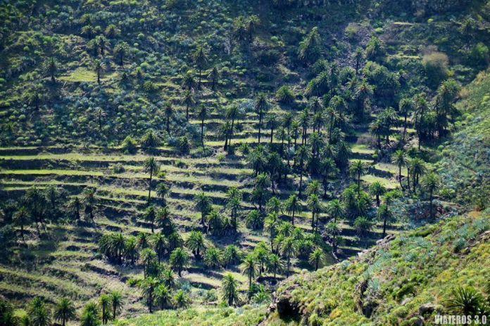 bancales, qué hacer y qué ver en La Gomera