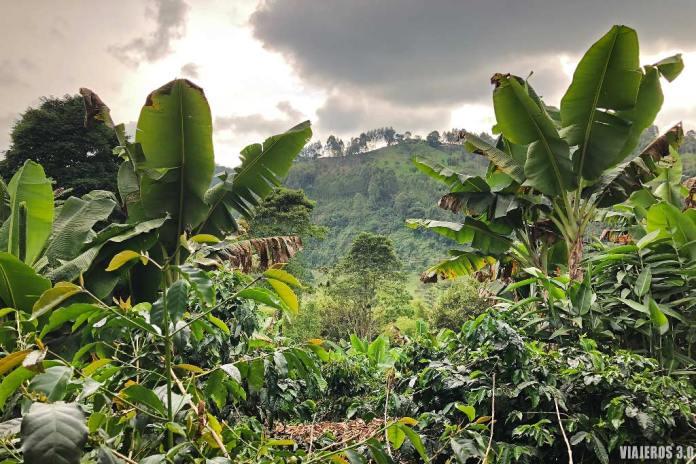Cafetales en Colombia, que hacer y que ver en Medellín