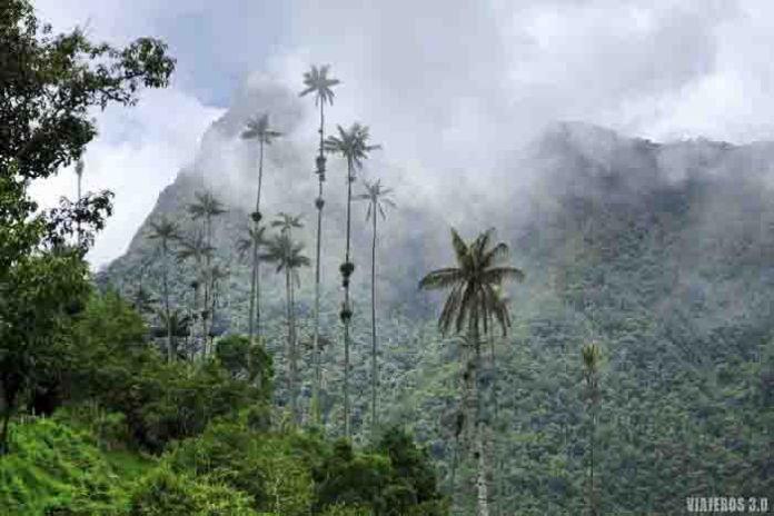 Valle de Corora, palmas de cera en Colombia