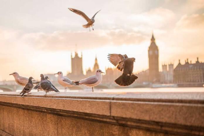 trucos para ahorrar en Londres