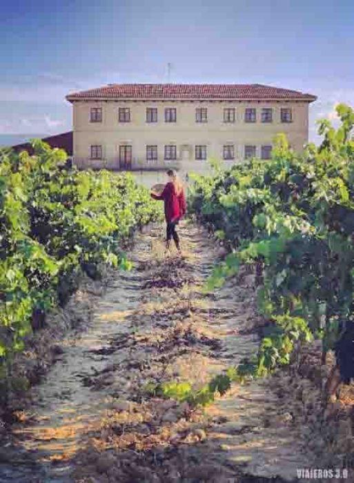 Muriel Wines, sede en ElCiego