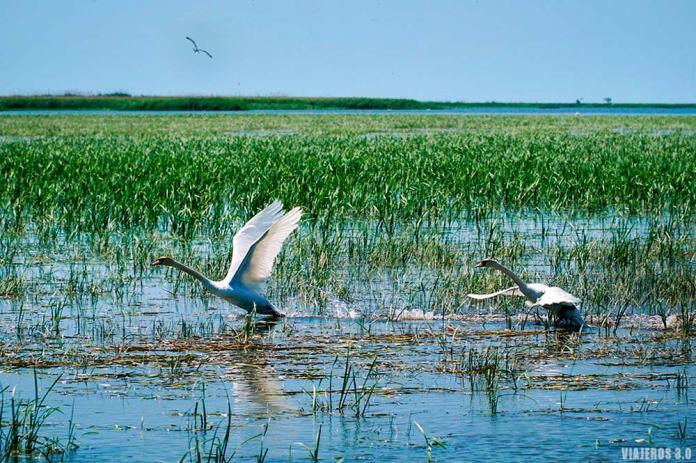 Observación de aves, que ver en el Delta del Danubio.