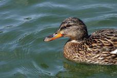 Fauna en las Lagunas de Ruidera