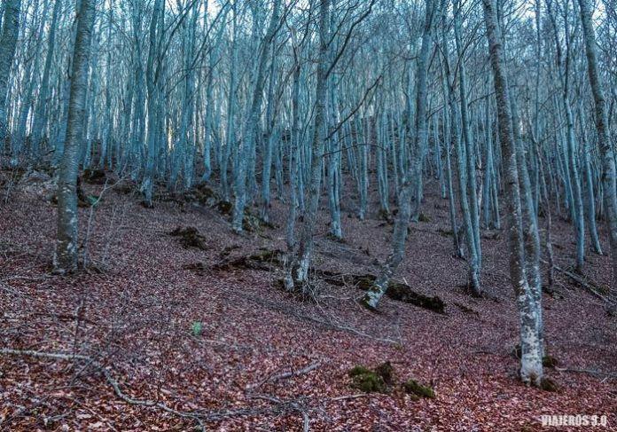 Sierra de la Demanda, Montes de Ayago