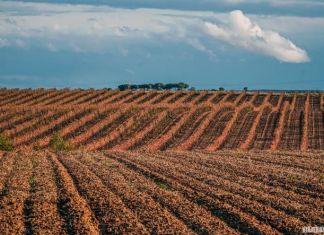 Qué ver en Toro, ruta del vino de Toro (Zamora)