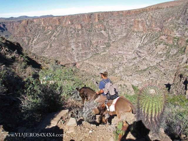 Hombre a caballo junto a un gran cactus