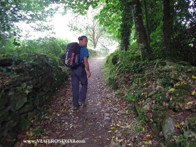 Caminando por el bosque en el Camino de Santiago