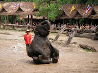 Día 8: Tailandia (Chiang Mai: Excursión Aventura con elefantes, ruta selva, carrera carruajes, descenso río, etc. Mercado Orquídeas, Bazar nocturno, Bubbles, etc). ViajerosAlBlog.com