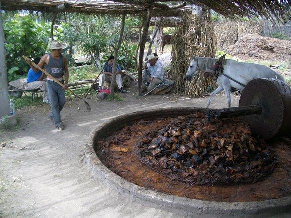 El elaborar el mezcal, tras haber quemado y dejado enfriar las piñas se trituran