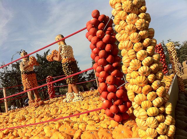Jucker Farmart - La fiesta de las calabazas - Boxeo, 2012