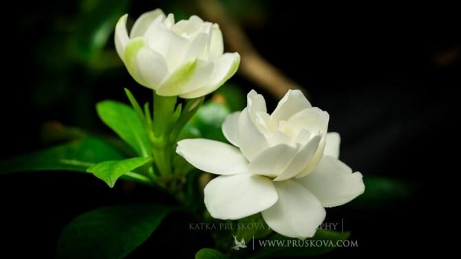 Timelapse de flores