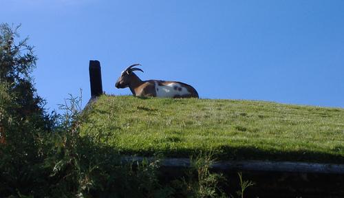 Al Johnson y Butik: Un restaurante con cabras en el tejado