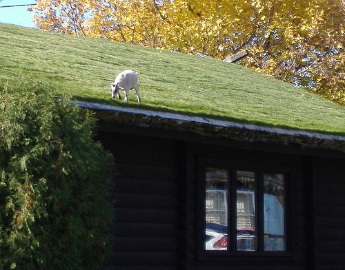 Un restaurante con cabras en el tejado