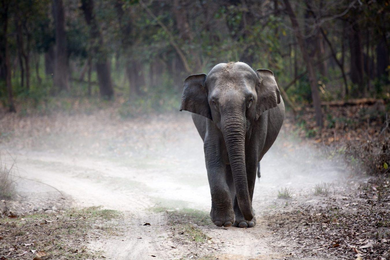 India animales