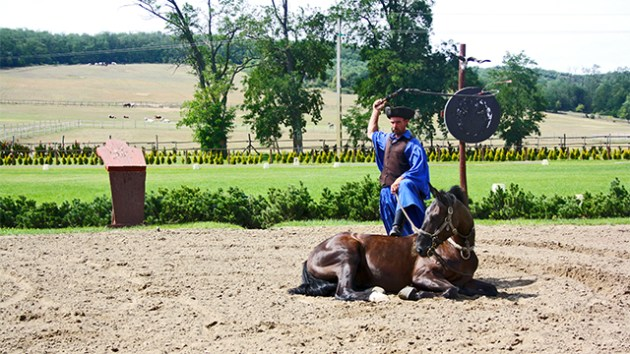 Jinete domando caballo hermanos Lazar exhibición Puszta Hungría