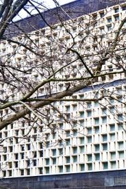 Árbol ramas fachada edificio modernista cuadros geometría centro Hannover