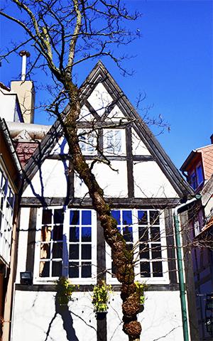 Fachada casa tradicional árbol barrio Schnoor Bremen
