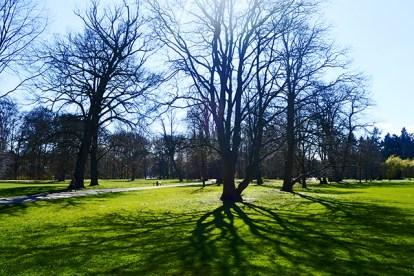 Panorámica césped árboles parque Bürgerpark Bremen