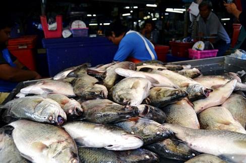 Pescados grandes vivos Mercado sobre la vía del tren Mae Klong Tailandia