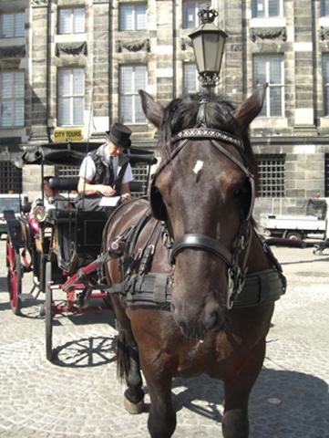 Caballo carruaje Plaza Damm Amsterdam
