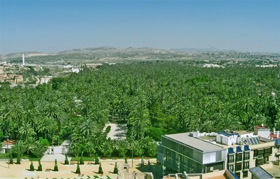 Paisatje verdos i Palmerer del Parc Municipal des de la Torre de la Basilica ilicitana