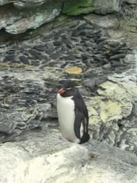 Pingüino Oceanario de Lisboa