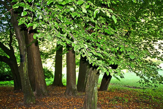 Árboles vegetación bosque parque nacional Ojców Polonia