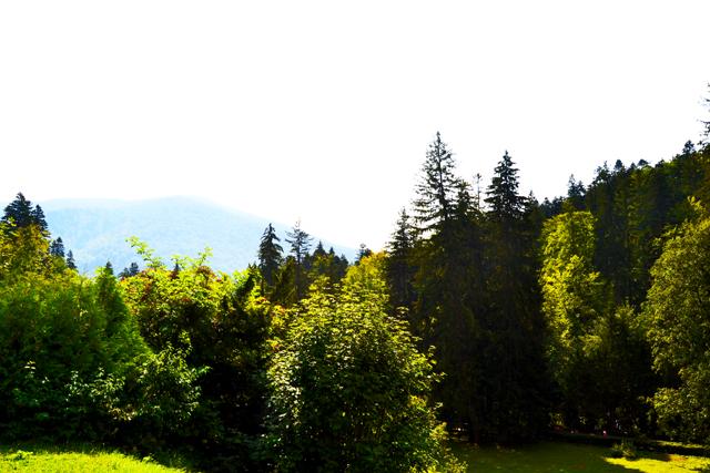 Bosques árboles Sinaia Rumanía