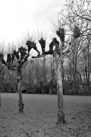 Árboles alrededores Brujas blanco y negro