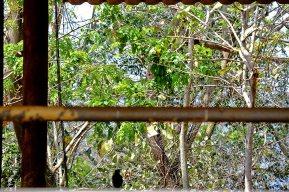 Curvo escondite vegetación Elephant Nature Park Chiang Mai