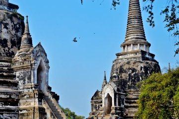 Chedis blancos y negros vuelo paloma Parque Nacional Ayutthaya