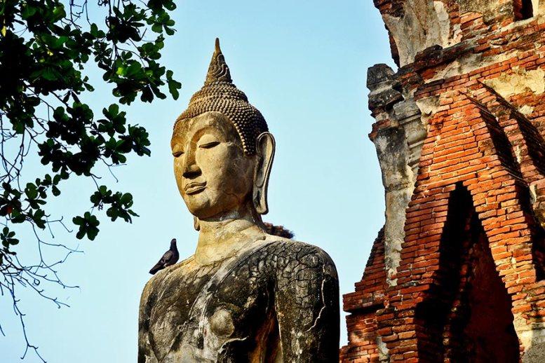 Buda paloma ruinas templos Ayutthaya