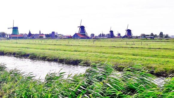 Vegetación viento región molinos Holanda