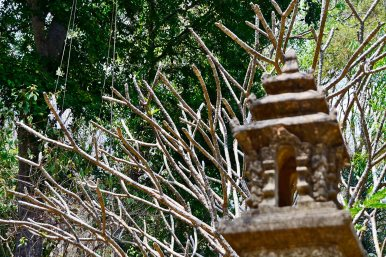 Farolillo piedra ramas árbol templo Wat Sakithaka Chiang Mai